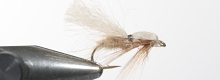 Thumbnail image for The Sedge Fly